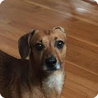 Adopt A Pet :: Rookie - San Antonio, TX