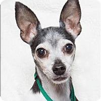 Adopt A Pet :: Pooch - San Luis Obispo, CA
