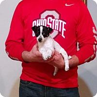Adopt A Pet :: Faith - South Euclid, OH