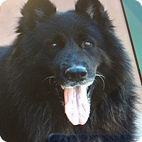 Adopt A Pet :: APACHE VON ALARIC - Los Angeles, CA
