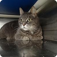 Adopt A Pet :: Gabby - Elyria, OH