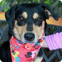 Adopt A Pet :: Luca-PENDING - Garfield Heights, OH