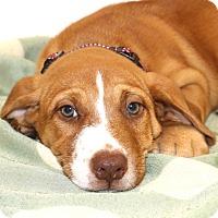 Adopt A Pet :: Lawson~adopted! - Glastonbury, CT