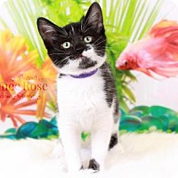 Adopt A Pet :: Mary Ann - Sterling Heights, MI