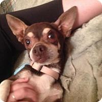Adopt A Pet :: Sasha - adoption pending - Centreville, VA