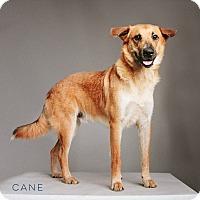 Adopt A Pet :: Cane - Houston, TX