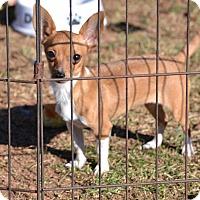 Adopt A Pet :: Buttercup - Pikeville, MD