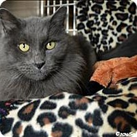 Adopt A Pet :: Mr. Incredible - Sherwood, OR