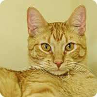 Adopt A Pet :: Dandy - Great Falls, MT