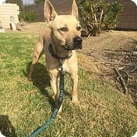 Adopt A Pet :: Quinn - Beverly Hills, CA