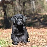Adopt A Pet :: babe - Groton, MA