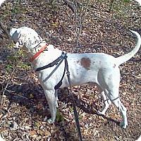 Adopt A Pet :: Reggie - Normandy, TN
