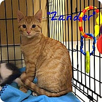 Adopt A Pet :: Zander - Ocean City, NJ