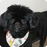 Adopt A Pet :: Sir Jenkins - Virginia Beach, VA