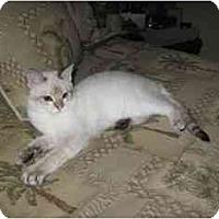 Adopt A Pet :: marcel - Davis, CA