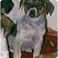 Adopt A Pet :: Queenie - dewey, AZ