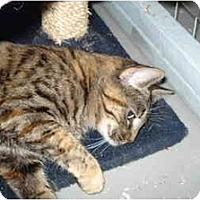 Adopt A Pet :: Robin - Mission, BC