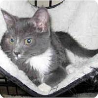 Adopt A Pet :: Bootsie - Davis, CA