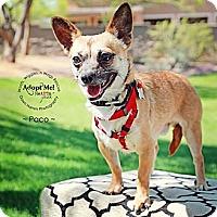 Adopt A Pet :: Paco - Scottsdale, AZ