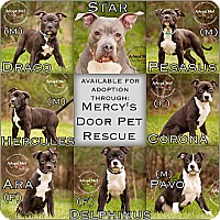 Adopt A Pet :: Constellations litter - Medina, OH