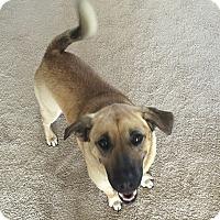 Adopt A Pet :: Mylee - Nashville, TN