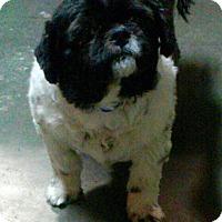 Adopt A Pet :: Otis - Meridian, ID