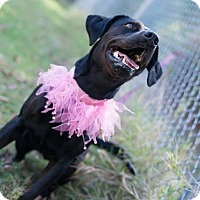 Adopt A Pet :: Bianca - Muldrow, OK