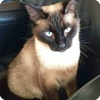 Adopt A Pet :: Kit Kat - McHenry, IL