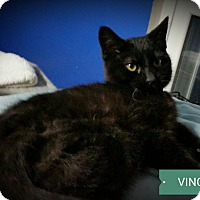 Adopt A Pet :: Vincent - Fairborn, OH