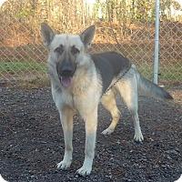 Adopt A Pet :: Thor - Manning, SC