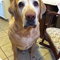 Adopt A Pet :: Buddy #4 - Buckeystown, MD