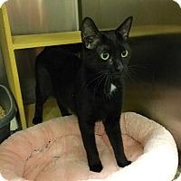 Adopt A Pet :: Lena - Colmar, PA