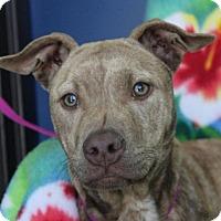 Adopt A Pet :: KELLY - Red Bluff, CA