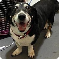 Adopt A Pet :: 16-09-2695 Danny - Dallas, GA