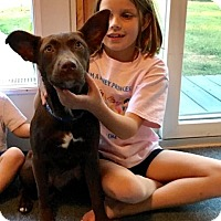 Adopt A Pet :: Velvet - GREENLAWN, NY