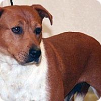 Adopt A Pet :: Ariel - Wildomar, CA