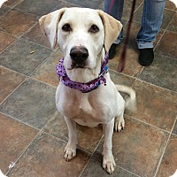 Adopt A Pet :: Raina - Lisbon, OH