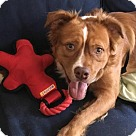 Adopt A Pet :: Atlas