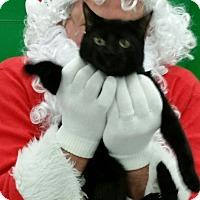 Adopt A Pet :: Evie - St. Louis, MO