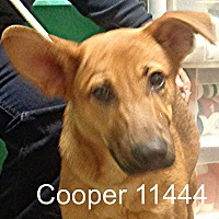 Adopt A Pet :: Cooper - baltimore, MD