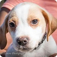 Adopt A Pet :: Spots - Daleville, AL