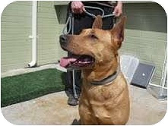 Shepherd (Unknown Type) Mix Dog for adoption in Marina del Rey, California - Iris