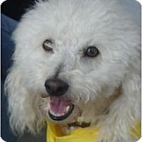 Adopt A Pet :: Romeo - Lake Forest, CA
