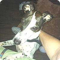 Adopt A Pet :: Mooky - Croton, NY