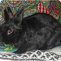 Adopt A Pet :: Moe - Williston, FL