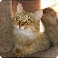 Adopt A Pet :: Liza - Medway, MA