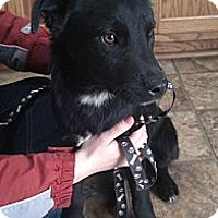 Adopt A Pet :: Parker - Nanuet, NY