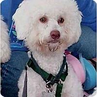 Adopt A Pet :: Moxie - La Costa, CA