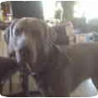 Adopt A Pet :: Siggy - Eustis, FL