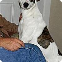 Adopt A Pet :: TarJay - Vidor, TX